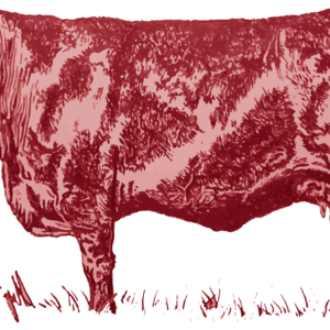 Buy Red Angus- 400 Commercial Red Angus Cattle are available for sale near you.